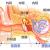 耳管開放症の原因と初期症状は?